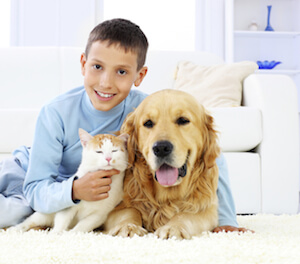 The Effect Pet Urine Has on Carpet