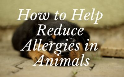 How to Help Reduce Allergies in Animals