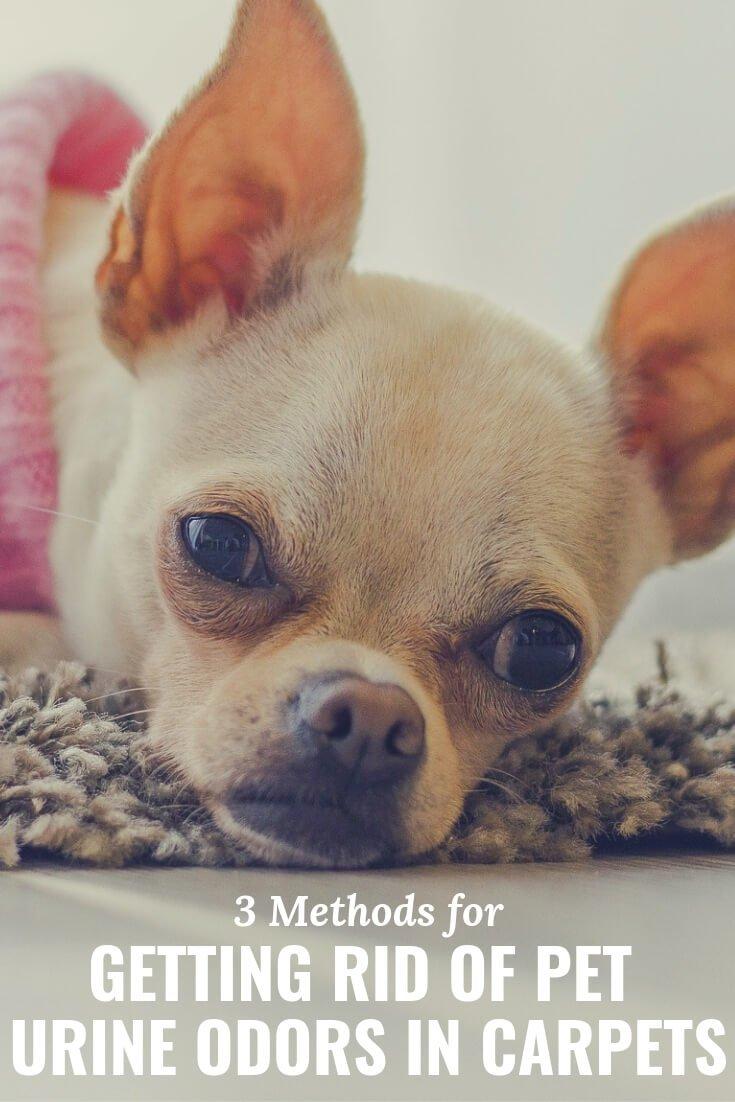 3 methods for removing pet urine