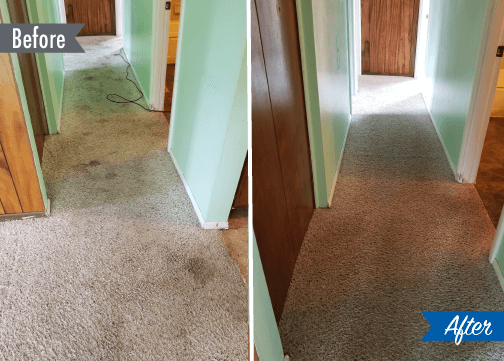 carpet cleaning before and after photo detroit mi